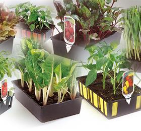 Vente de plants : fleurs et légumes